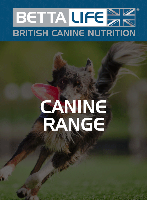 BettaLife Canine Range